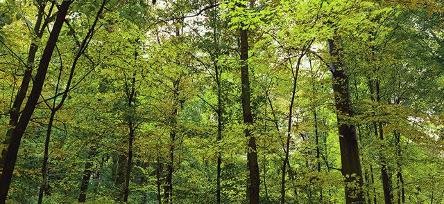 Woodmont Cabinetry environmental stewardship program